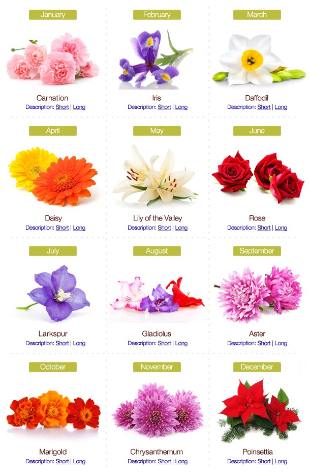 Birth Month Flowers Combined