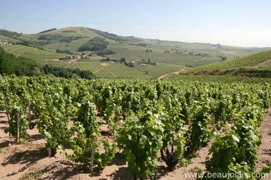 Beaujolais area next to Lyon