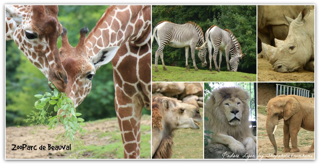ZooParc de Beauval African Animals1