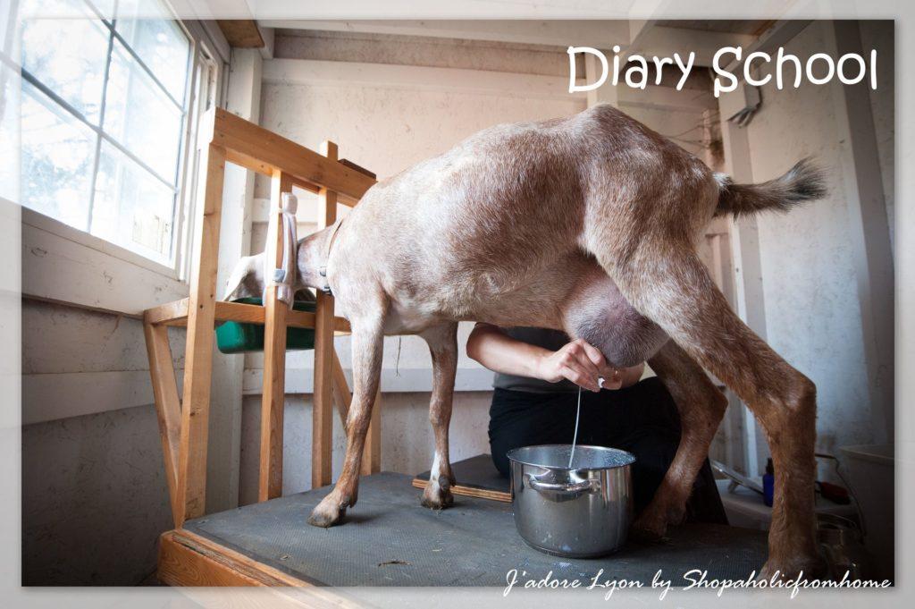 Diary-school
