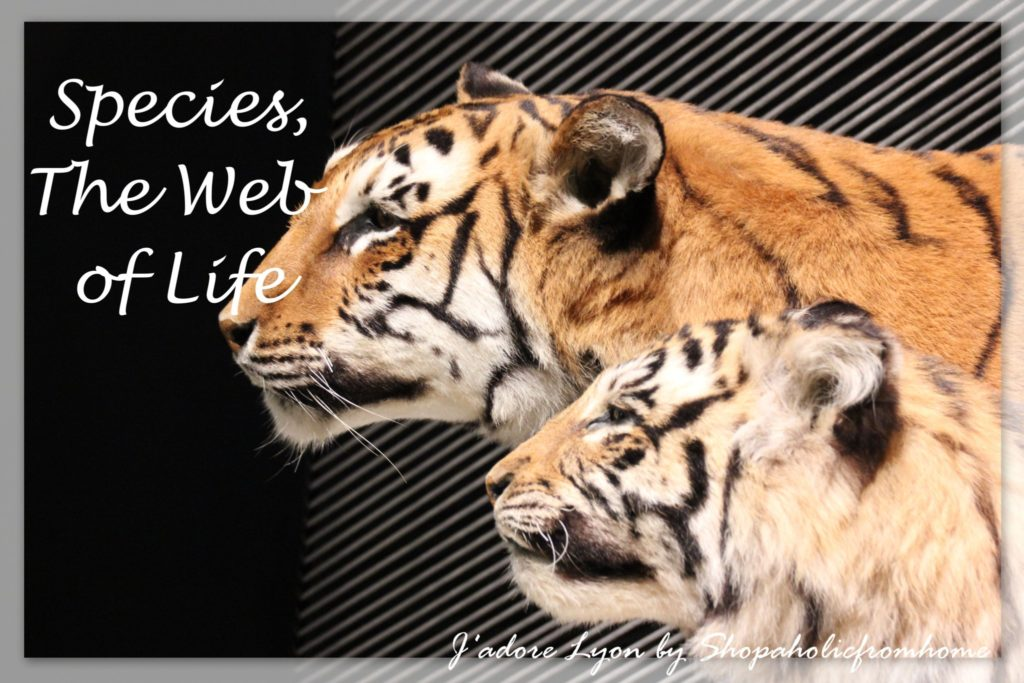 species-the-web-of-life-even-more1