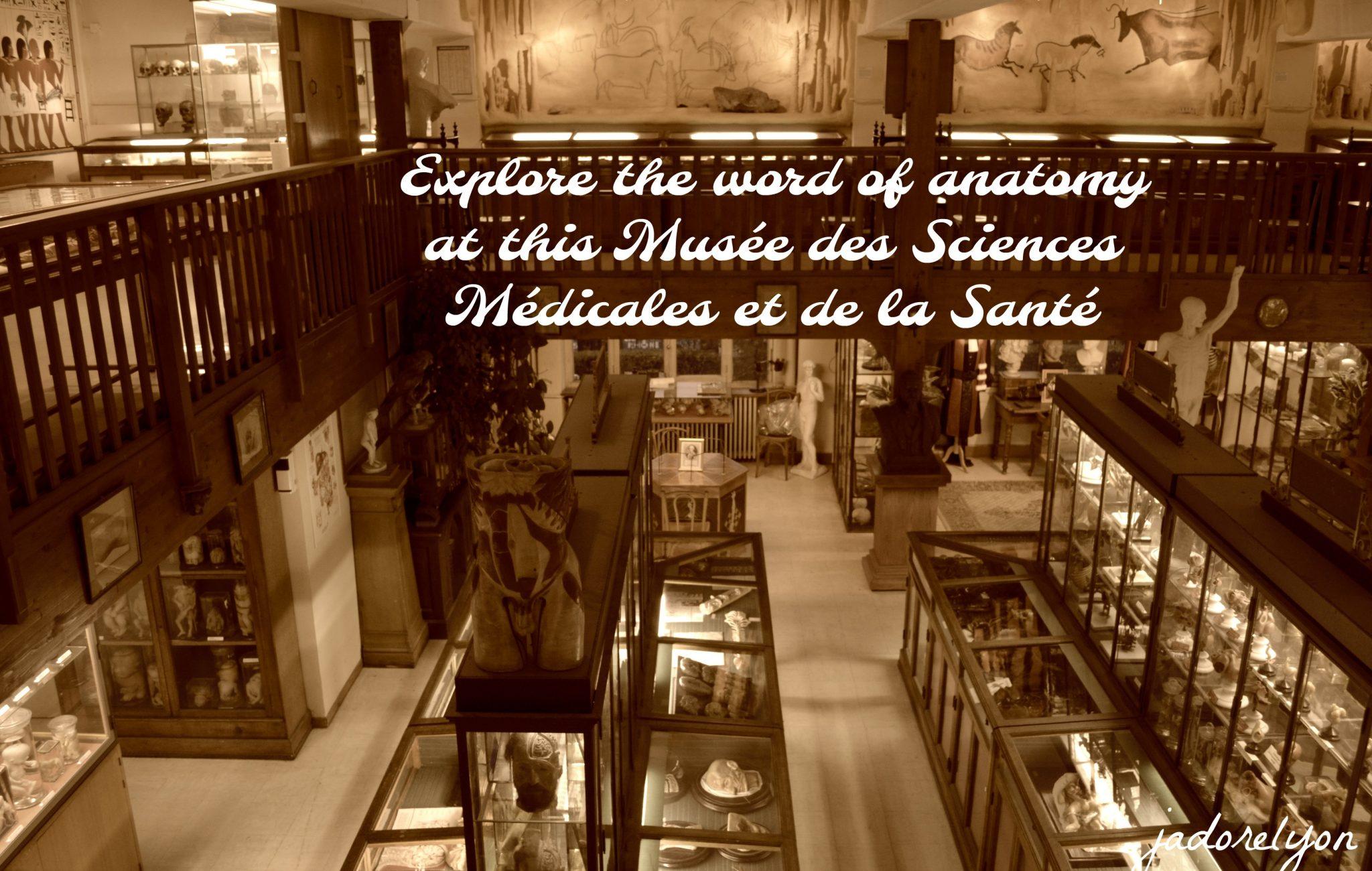 explore the word of anatomy at this Musée des Sciences Médicales et de la Santé