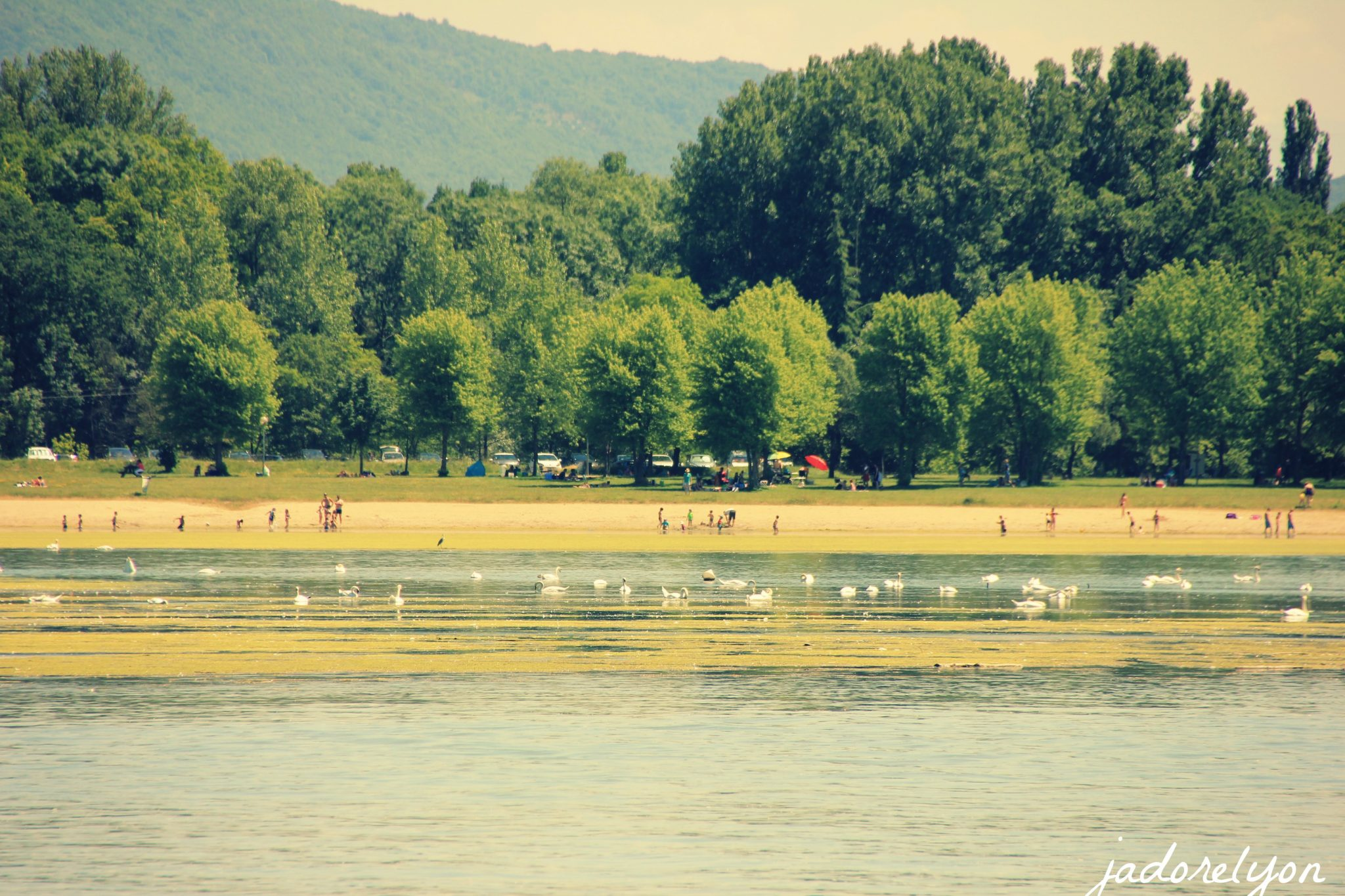 Beach, picnic area and the lake - a perfect family day out