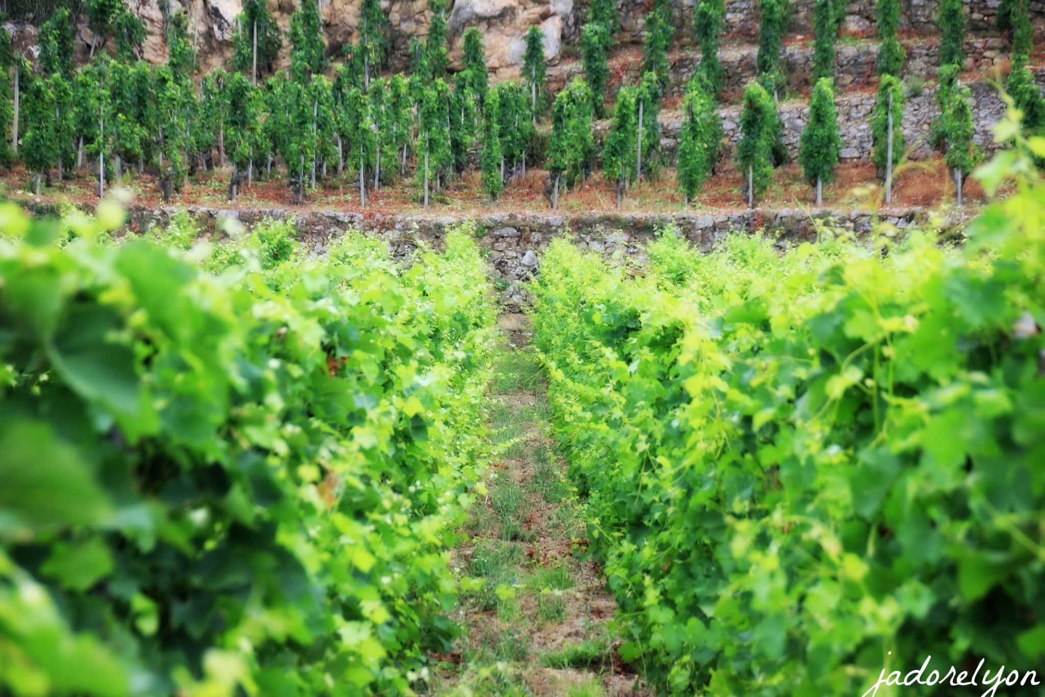 Start by getting the feel of vineyards.